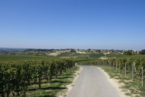 Backroad in the vineyards during a Wine tour Saint Emilion
